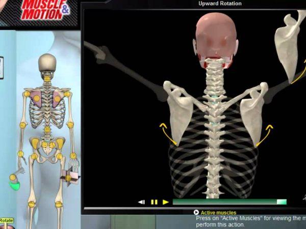 肩甲骨の動きについて視覚的に理解してみよう