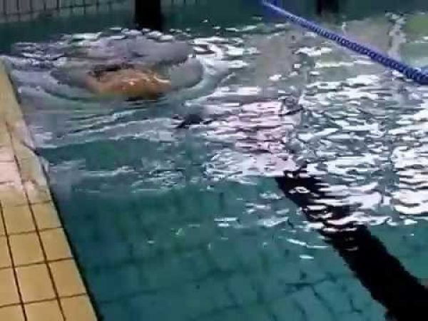 バタフライのキック、ドルフィンキックを上手くする練習方法