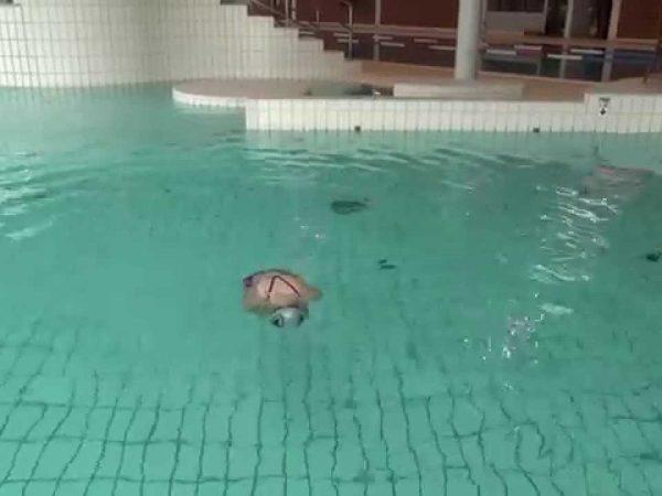 水に対する感覚を養って、泳ぎやすい姿勢を作ろう!